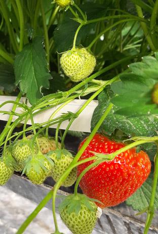 Obstproduktion